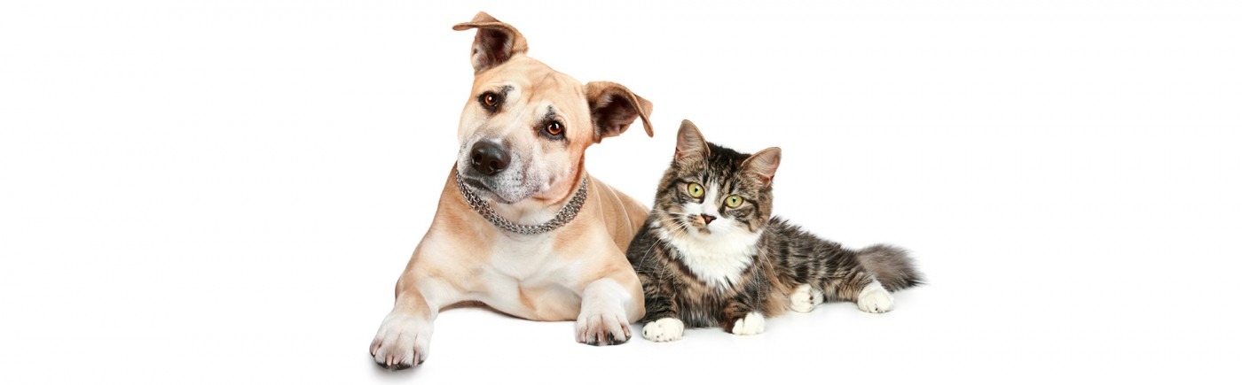 Bild von einer Katze, die sich an einem Hund anlehnt. Beide schauen neugierig in die Kamera